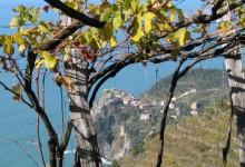 La viticoltura estrema:  il Fieno di Ponza