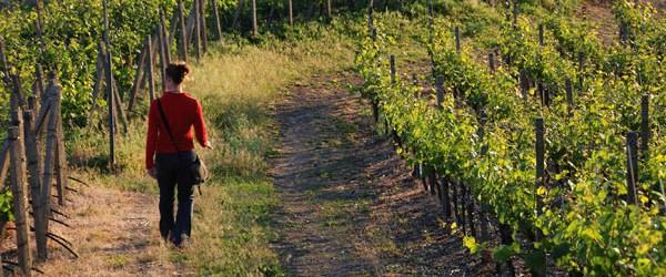 Le new entry nel circuito della Strada dei vini e dei sapori.