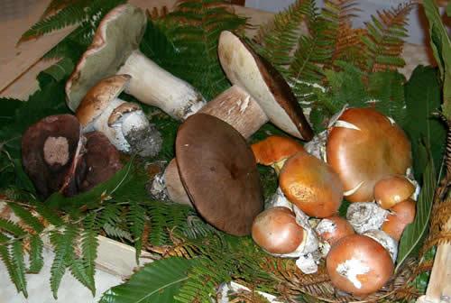 funghi-porcini-pianoro